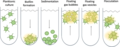 Collective behaviour and lifestyle choices in single-celled cyanobacteria.webp