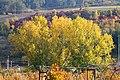 Colori d'autunno a San Ruffillo - panoramio.jpg
