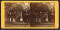 Com. Tatnall's lot, Bonaventure, from Robert N. Dennis collection of stereoscopic views.png