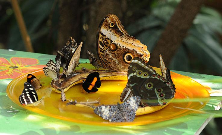 ComputerHotline - Lepidoptera sp. (by) (33).jpg