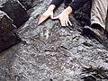 Conococheague Formation - Stromatolites (4801523669).jpg