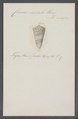 Conus monile - - Print - Iconographia Zoologica - Special Collections University of Amsterdam - UBAINV0274 086 07 0041.tif