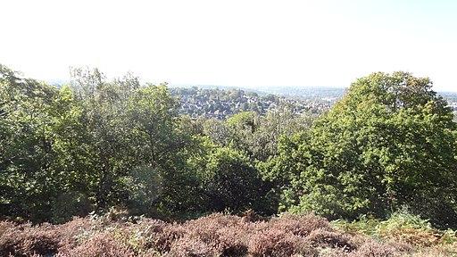 Croham Hurst view
