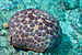 Pillow Cushion Star - Photo (c) Joi Ito, some rights reserved (CC BY)