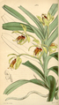 Curtis's Botanical Magazine, Plate 4304 (Volume 73, 1847).png