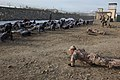 Czech soldiers train Afghan military police DVIDS233415.jpg