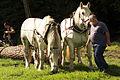 Débardage JEAN BAPTISTE RICARD mondial du cheval percheron 2011Cl J Weber09 (23455247024).jpg