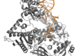 DNA Pol II Active Site.png