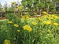 Dadra Garden - panoramio.jpg