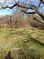 Dags att beskära träden (8781004660).jpg