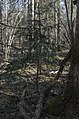 Daiķu īvju audzē, 13.04.2019. - 49366198312.jpg