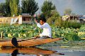 Dal Lake's sunset tour on a shikara - Srinagar (9967013234).jpg