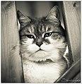 Dame Poupette - Steve.© - (8602053121).jpg