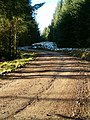 Dappled Sunlight on Forest Road - geograph.org.uk - 84302.jpg