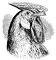 Darwin Domestic 131.png