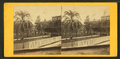 Date palm, St.Augustine, Fla, from Robert N. Dennis collection of stereoscopic views.png
