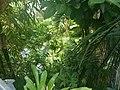 De Plantage (18).jpg