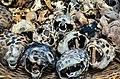 Dead organisms Bohicon-Benin (4).jpg