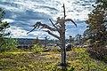 Dead tree on Kivitunturi, Savukoski, Lapland, Finland, 2021 June.jpg