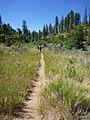 Deer Trap Mountain Trail - panoramio.jpg