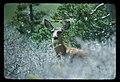 Deer in Denali National Park (597aba291fc34d2da5040fdb6f2b598d).jpg