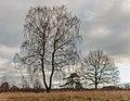Delleboersterheide, natuurgebied van het It Fryske Gea. 25-12-2019. (actm.) 23.jpg