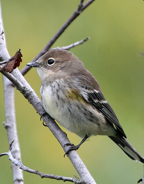 Tiny Songbird  Letters