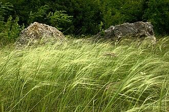 Pannonian Steppe - Devínska Kobyla forest-steppe in Slovakia