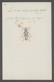 Diorus - Print - Iconographia Zoologica - Special Collections University of Amsterdam - UBAINV0274 033 04 0030.tif