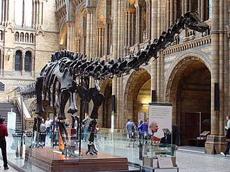Dippy - Dippy in the Hintze Hall at the Natural History Museum in 2008