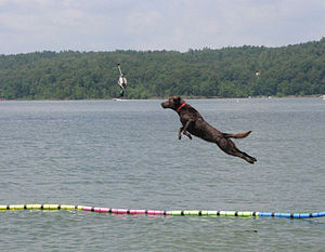 A 'dock dogs' fun jump competition was held at...