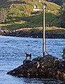 Dog imitation on a small islet - Norway - panoramio.jpg