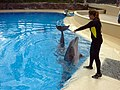 Dolphins (7980894471).jpg