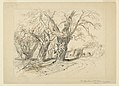 Drawing, Study for The Cypress Trees of Montezuma, Park of Chapultepec, Mexico, 1892 (CH 18369181).jpg