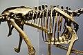 Dromaeosaurus trunk detail Royal Tyrrell.jpg