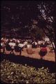 EASTMAN PARK, A MUCH APPRECIATED GREEN SPOT IN DOWNTOWN CLEVELAND - NARA - 550074.tif