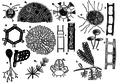 EB1911 Algae - Fig. 2.-Chlorophyceae.png
