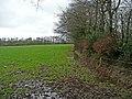 Edgeworthy side of Looseland Plantation - geograph.org.uk - 664251.jpg