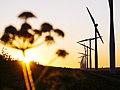 Eemmeer windmills - panoramio (6).jpg