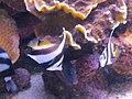 Eilat Coral World Underwater Observatory 05.jpg