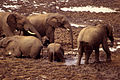 Elefanteak.jpg
