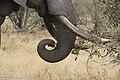 Elephant (29247729207).jpg
