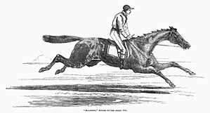 Ellington (horse) -  Ellington, from the Illustrated London News
