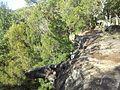 Engadine NSW 2233, Australia - panoramio (174).jpg