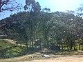 Engenho Lanches - panoramio (2).jpg