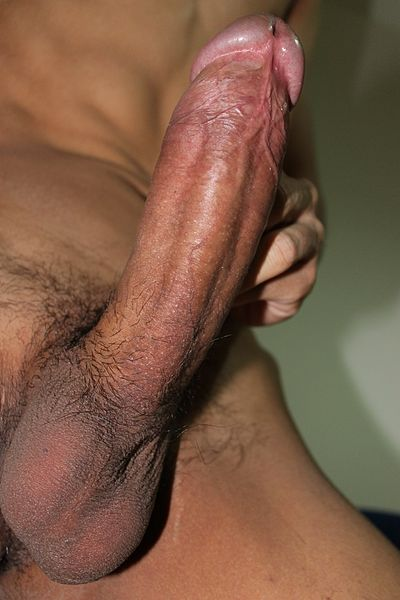 very large human penis