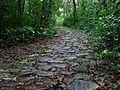 Estrada da Serra Velha entre Raiz da Serra e Lopes Trovão-RJ (1518041579).jpg