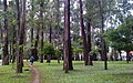 Eucalyptus Grove (5294473924).jpg