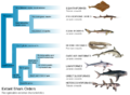 Branching diagram listing distinguishing characteristics, including mouth, snout, fin spines, etc.