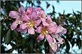 FLOWERS 4 (8152279203).jpg